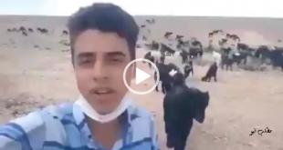سروش رضایی که با خواندن ترانه هایی در صحرا در حین چوپانی و انتشار آن در فضای مجازی غوغایی به پا کرده بود خبر حضورش در برنامه های عید نوروز را اعلام کرد