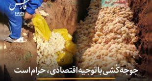 حجت الاسلام مهدوی ارفع در خصوص حادثه رخ داده در صنعت مرغداری این عمل را غیر انسانی دانست و گفت جوجهکُشی با توجیه اقتصادی حرام است