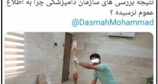 یکی از ۳ زرافه وارداتی به ایران که در باغ وحش صفادشت نگهداری می شد به علت نامعلومی تلف شد