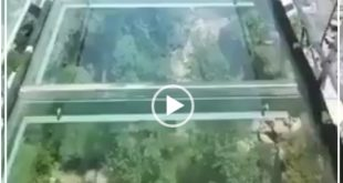 افتتاح اولین پل معلق شیشه ای ایران در اردبیل و فیلم های منتشر شده از این پل مورد توجه بسیاری از کاربران قرار گرفته است