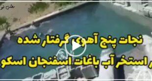 روز گذشته ۵ قلاده آهو بر اثر تشنگی به یکی از استخرهای موجود در باغهای اطراف اسفنجان اسکو برای نوشیدن آب رفتند که بر اثر سقوط در درون استخر گرفتار شدند