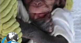 باران بچه شامپانزه ایست که به صورت نارس در باغ وحش ارم تهران به دنیا آمد بعد از تولد مادرش و دیگر شامپانزه ها او را در بین خود نپذیرفتند و دامپزشک مجموعه به ناچار او را به مدت سه سال در کنار خود نگهداری و بزرگ کرد