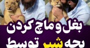 در ویدیوی منتشر شده از «علی زند وکیلی» موزیسین و خواننده او با بغل کردن یک بچه شیر و ابراز علاقه به این حیوان در تصمیمات درمورد نگهداری او صحبت کرد