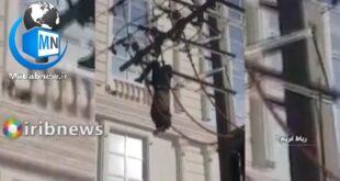 فردی که اقدام به دزدیدن کابلهای برق در رباط کریم میکرد پس از بالا رفتن از کابل فشار قوی به علت تماس برق در حالت برق گرفتگی خشک شد البته او به طور معجزه آسایی توسط ماموران آتش نشانی نجات داده شد و زنده ماند