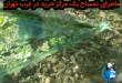 فیلمی از یک مرکز خرید واقع در غرب تهران که با ایجاد یک اتاقک شیشه ای کوچک اقدام به نگهداری یک تمساح و لاکپشت و سمندر کرده بود واکنش های مختلفی از طرف فعالان محیط زیست در بر داشت