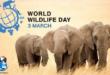 روز جهانی حیات وحش فرصت ایدهآلی برای اشکال مختلف حیات گیاهی و جانوری است تا بتوانیم آگاهیهای مردمی درباره منافع بیشمار آنها را افزایش دهید