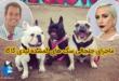 روز گذشته خبر حمله به رایان فیشر محافظ سیساله لیدی گاگا و سرقت سگ های او به یکی از خبرهای پر بازدید در فضای مجازی تبدیل شد