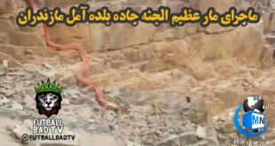 انتشار یک فیلم عجیب و غریب از یک مار ۲۰ متری که گفته میشود در مازندران و در جاده بلده آمل فیلم برداری شده به یک جنجال جدید در فضای مجازی تبدیل شد