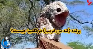 انتشار تصاویری از پرنده ای به نام (ننه من غریب) با ظاهری عجیب و دهانی بزرگ موجب ترس و وحشت زن کلمبیایی شد