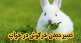 برای بررسی تعبیر دیدن خرگوش در خواب با این مطلب از سایت مطلب نیو همراه باشید تا به بررسی این موضوع بپردازیم