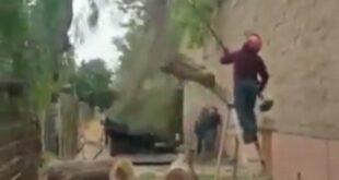 انتشار یک ویدئو هولناک از مرگ یک فرد که در حال هرس کردن درختان بود بسیاری را در شوک فرو برد