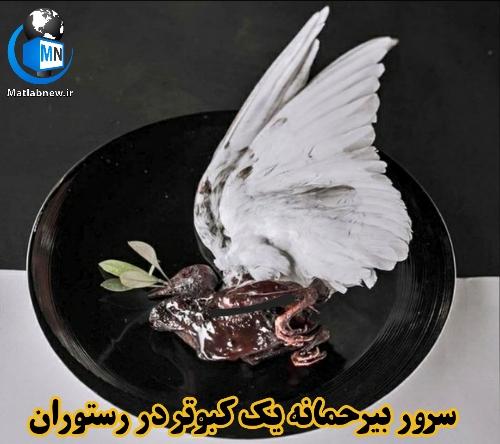 عکس/ سرو بی رحمانه یک کبوتر در یک رستوران تهران خبرساز شد
