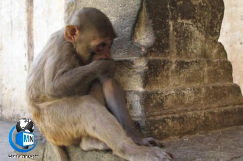 بیماری آبله میمونی چیست؟ + علائم و نشانه ها،راه های پیشگیری و درمان