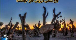 در جنوب غربی کرمان، درشهر سیرجان، یکی از عجیب ترین باغ های جهان وجود دارد. باغی با درختانی که میوه اش سنگ های آویزان از درخت است