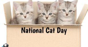 روز جهانی گربه 24 ساعت کامل به رسمیت شناختن و احترام گذاشتن به یکی از قدیمی ترین و دوست داشتنی ترین حیوانات خانگی بشریت است