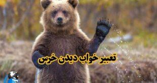 بسیاری از معبران در رابطه با دیدن خرس در عالم رویا تعابیری همچون استقلال و قدرت را بیان کرده اند که در ادامه این مطلب به تفسیر کامل این موضوع میپردازیم با ما همراه باشید