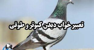 در رابطه با دیدن کبوتر و پرنده در عالم رویا تعابیر مختلفی از جمله عشق و محبت آمده است که در ادامه این مطلب به تعبیر آن میپردازیم