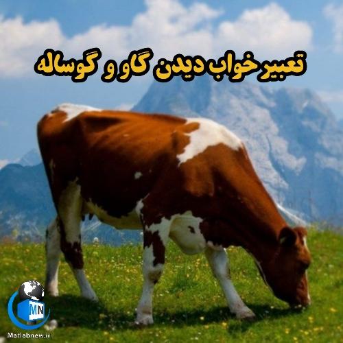 تعبیر خواب دیدن (گاو و گوساله) چیست؟ + خوردن گوشت گاو چه تعبیری دارد؟