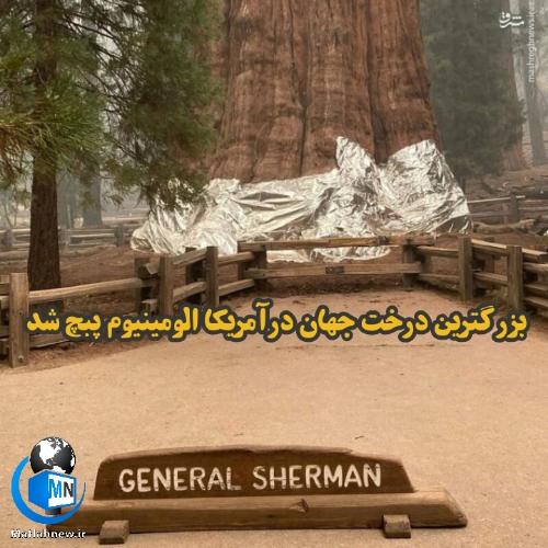 (ژنرال شرمن) بزرگترین درخت جهان در پارک ملی سکویا کالیفرنیا/بزرگترین درخت جهان آلومینیوم پیچ شد!